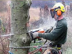 Tree RemovalReviews In Orange County